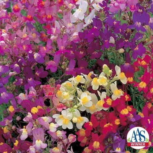 Linaria Fairy Bouquet - 1934 AAS Winner