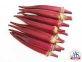 Okra Candle Fire AAS Winner - A unique red okra with pods that are round, not ribbed, and a brighter red color than the reddish burgundy okras currently available.