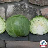 "Katarina Cabbage has a perfect smaller head size (4"") and shape to be grown successfully in containers on patios, decks or in-ground beds, possibly as an ornamental/edible border."