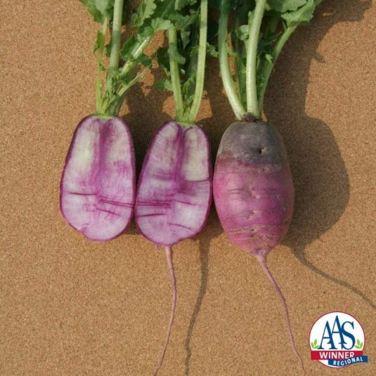 Sweet Baby accurately describes the look of this beautiful purple/white/rose colored radish.
