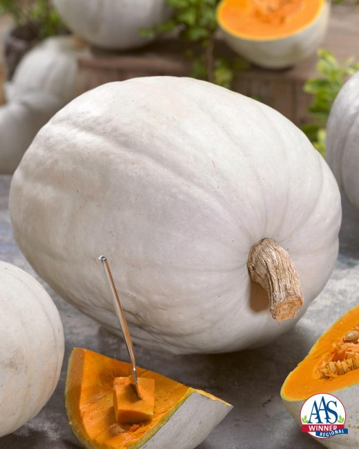 Pumpkin Super Moon F1 2016 AAS Vegetable Award Winner Love the look of white pumpkins for your fall holiday décor? Then you will love our first-ever white pumpkin AAS Regional Winner Super Moon F1.