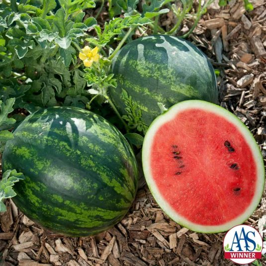Watermelon Mini Love F1 AAS Vegetable Award Winner This personal-sized Asian watermelon is perfect for smaller families and smaller gardens.