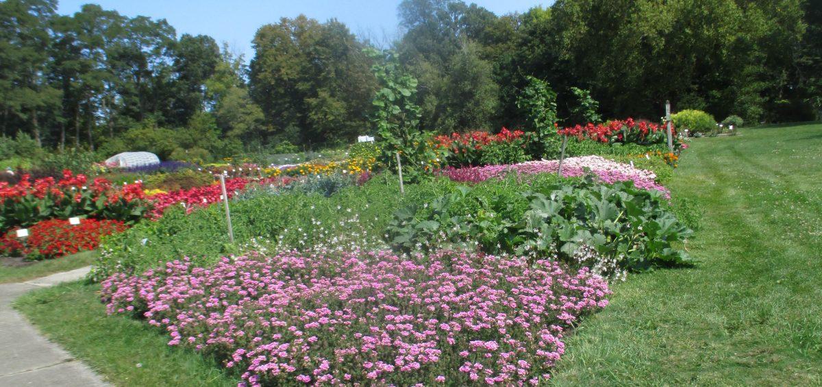 3rd Place Winner: Boerner Botanic Gardens, Hales Corners, Wisconsin    All America Selections