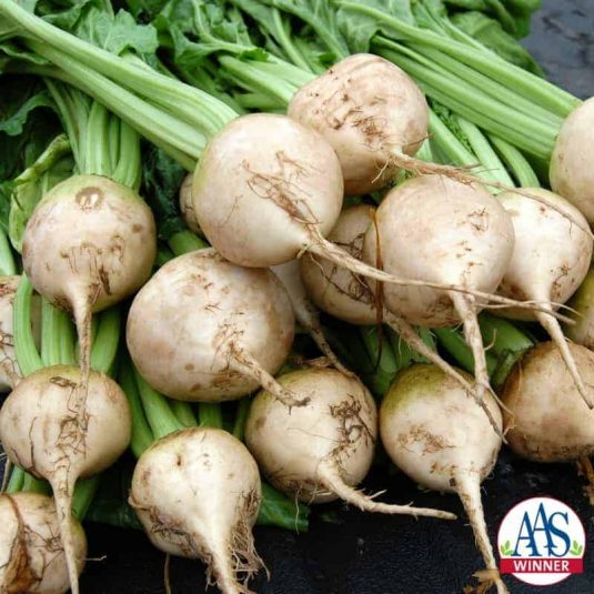Avalanche Beet exhibits a mild, sweet taste with a uniform root shape and no reddish tinge, making for more attractive produce.