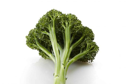 Broccoli Artwork is a unique and beautiful dark green stem broccoli that has only recently become available to home gardeners.