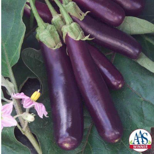 Eggplant Hansel F1 - 2008 AAS Vegetable Award Winner Hansel was bred by an eggplant lover.