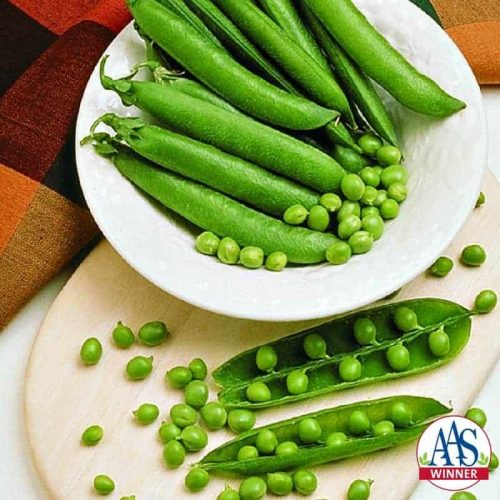 Pea Mr. Big- 2000 AAS Edible - Vegetable Winner - Mr. Big is a superior English or garden pea.