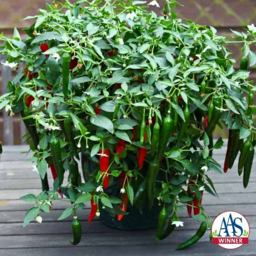 Pepper Cayennetta F1 - 2012 AAS Vegetable Winner - Cayennetta is an excellent tasting mildly spicy pepper that is very easy to grow, even for novice gardeners.