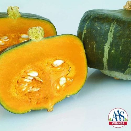 Squash Bonbon - 2005 AAS Edible - Vegetable Winner - Bonbon is a Cucurbita maxima with three improved traits.