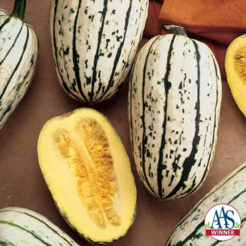 Squash Bush Delicata - 2002 AAS Edible - Vegetable Winner If you have never eaten a Delicata squash, this is the one to grow to eat.