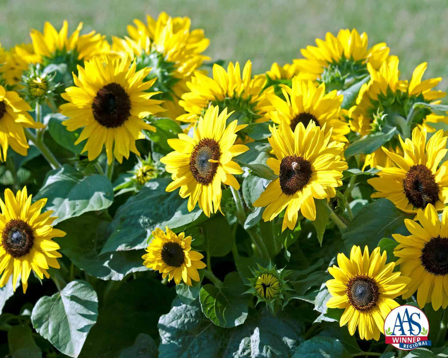 sun flowers and flower - photo #29