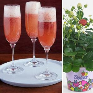 Grand Champagne with Strawberries