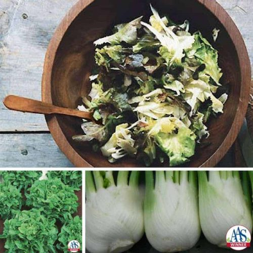 escarole, fennel and oak leaf lettuce salad