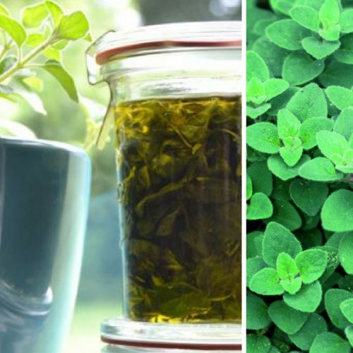 Make your own Oil Of Oregano