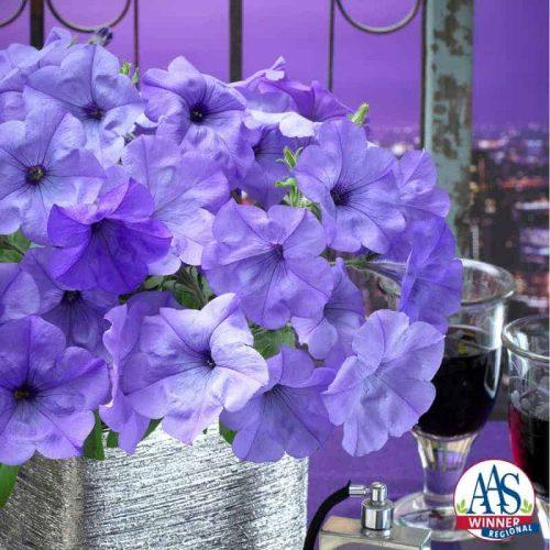 2017 Petunia Evening Scentsation - 2017 Flower Winner