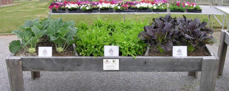 Main gardening raised bed