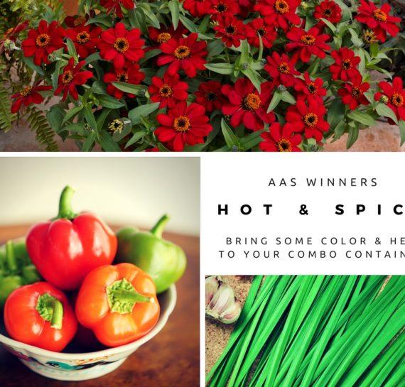 Hot & Spicy AAS Winners