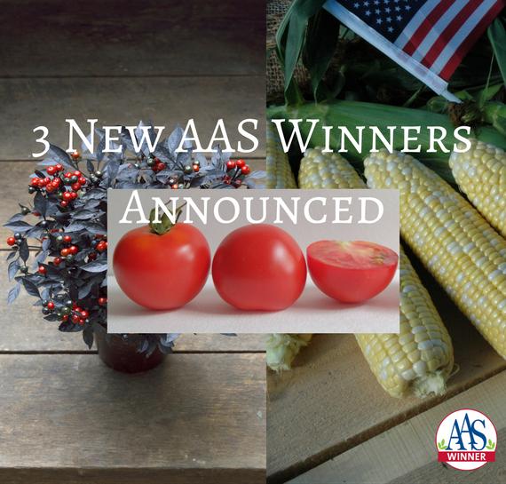 3 new AAS Winners Announced