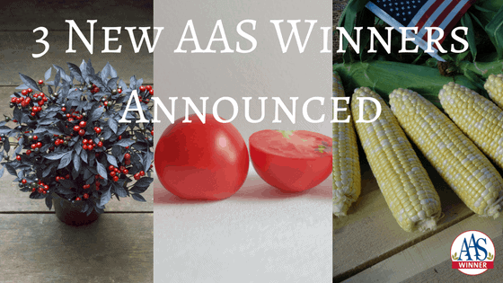 3 New AAS Winners Announced
