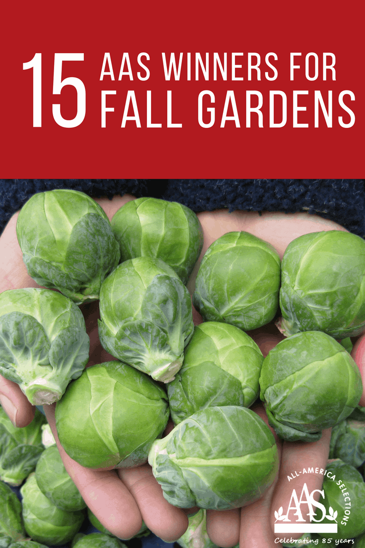 15 AAS Winners to grow for Fall - AAS Tested National and Proven Locally!
