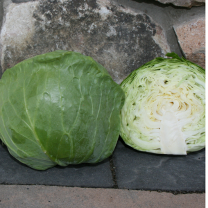 """Katarina Cabbage has a perfect smaller head size (4"""") and shape to be grown successfully in containers on patios, decks or in-ground beds, possibly as an ornamental/edible border."""