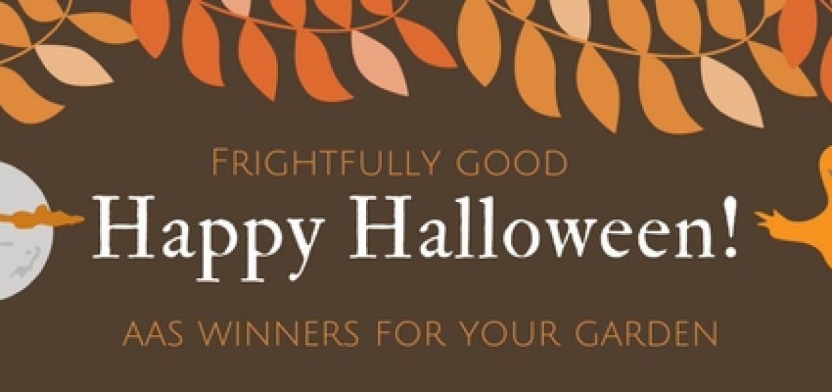 Frightfully Good AAS Winners for your Garden!
