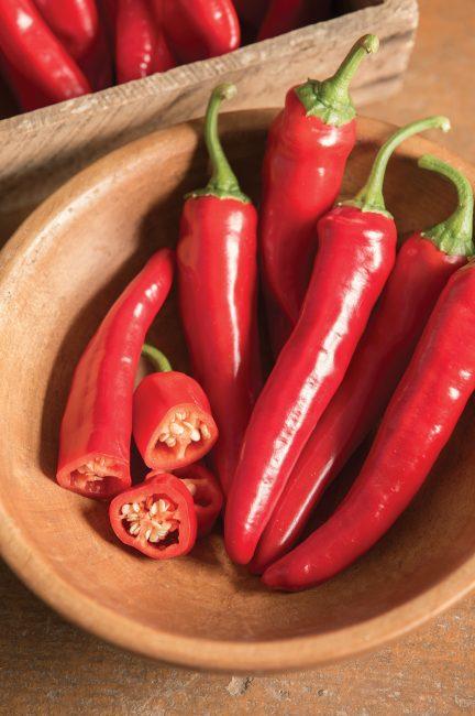 Pepper_red_ember-432x650.jpg