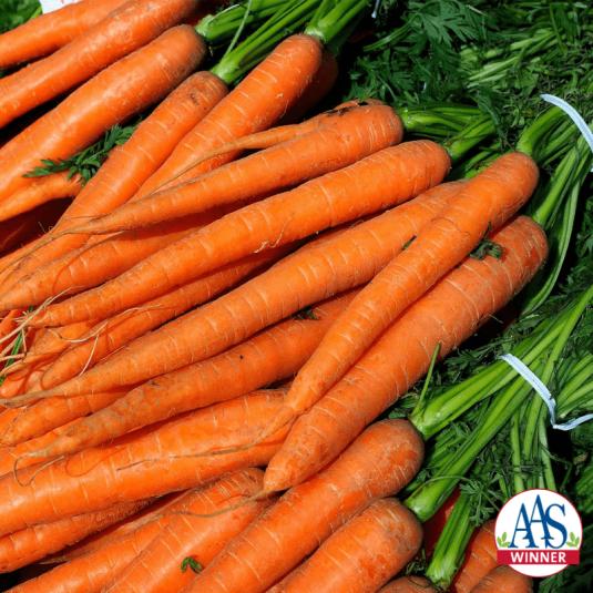 Carrot Imperator - AAS Winner