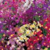 Linaria – Fairy Bouquet 1934 AAS Winner