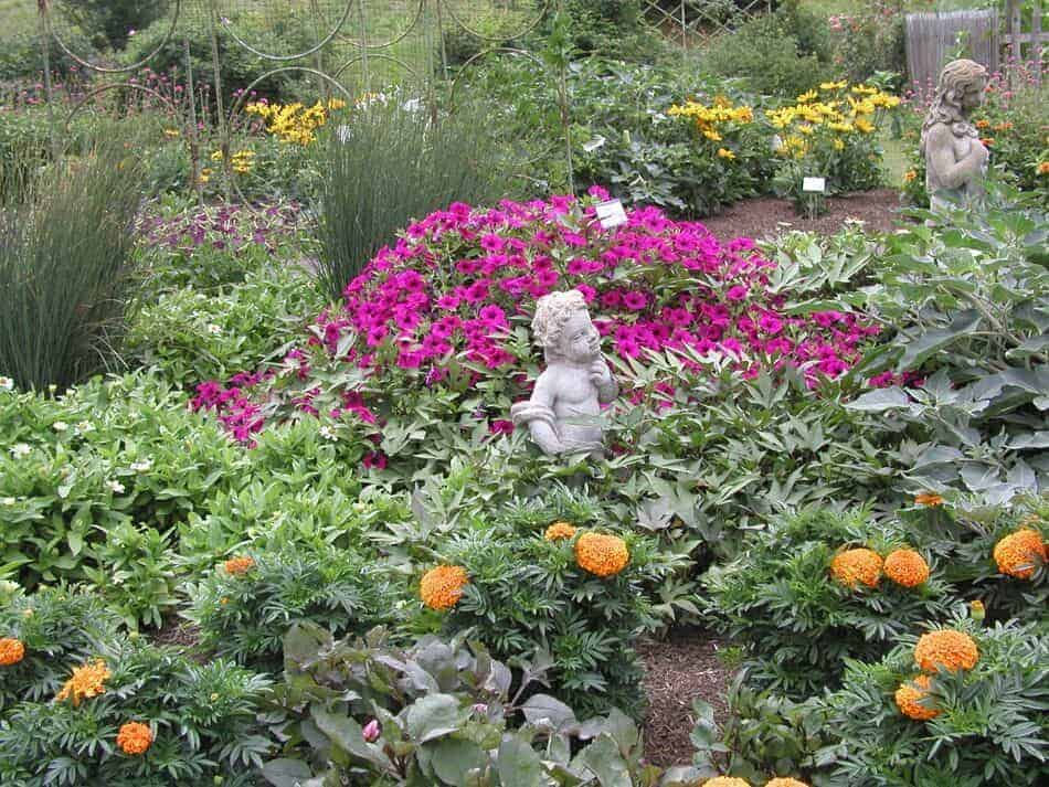 See AAS Winners At Nearly 200 Gardens