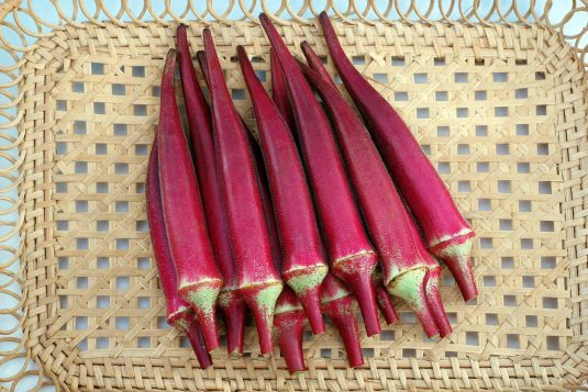 Okra Candle Fire F1 AAS Winner. A unique red okra with pods that are round, not ribbed, and a brighter red color than the reddish burgundy okras currently available.