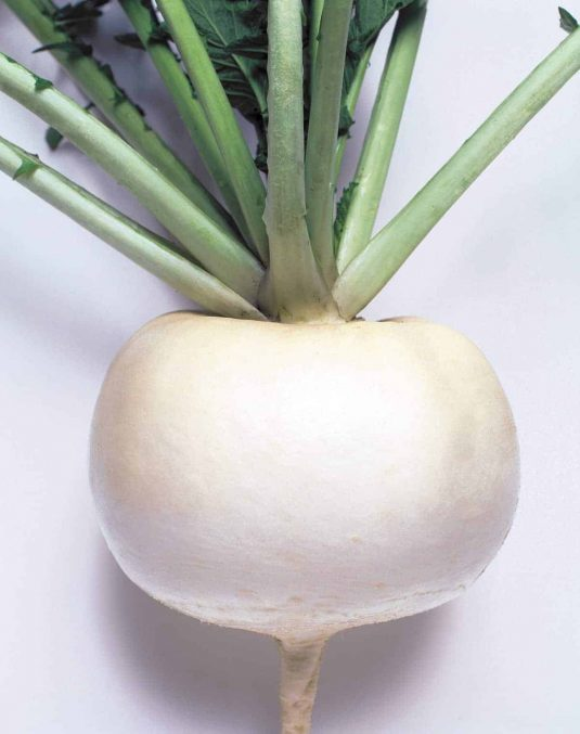 Turnip Just Right - 1960 AAS Edible-Vegetable Winner