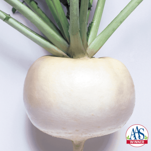 Turnip Just Right - 1960 AAS Edible-Vegetable Winner