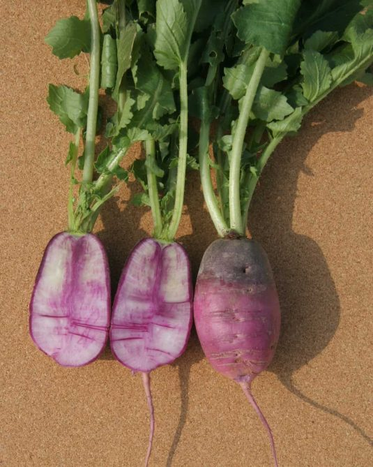 Radish Sweet Baby F1 2016 AAS Vegetable Award Winner Sweet Baby accurately describes the look of this beautiful purple/white/rose colored radish.