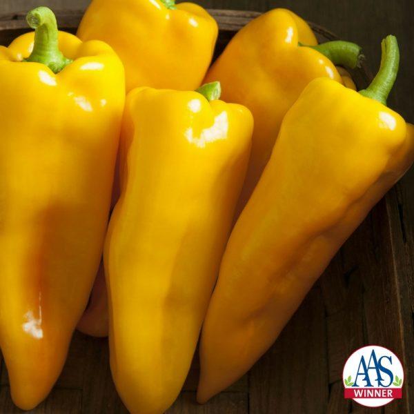 Pepper Escamillo