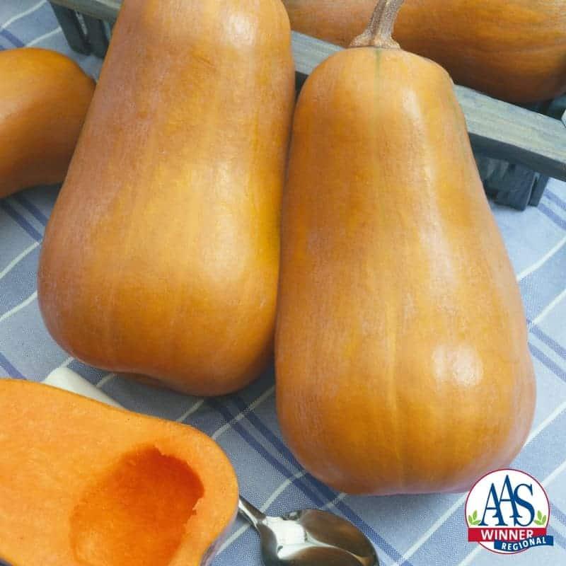 Squash Seeds 25 Honeynut Squash Butternut Vegetable Seed