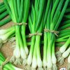 Onion, Bunching Warrior Edible - Vegetable Winner Now home gardeners have an easy-to-grow bunching onion (also known as a green onion) that is an All-America Selections Winner.
