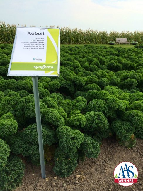 When grown, Prizm Kale produces attractive short, tight ruffle edged leaves that are content to be grown in containers as well as in-ground beds.