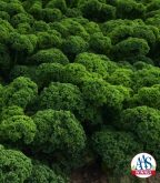 Dreaming of growing the popular superfood kale but think you don't have room? Look no further than our newest 2016