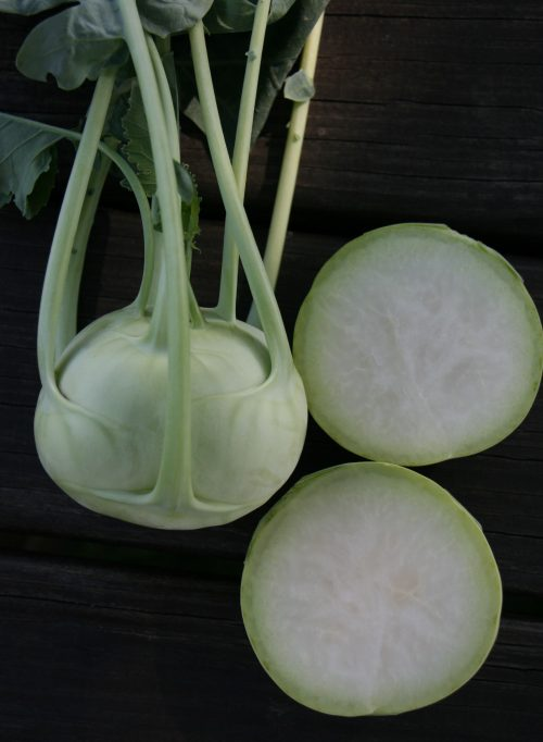 "Konan Kohlrabi was selected for it smooth, globe-shaped bulbs that can grow up to 6"" in diameter and are the perfect upright size and shape for container gardening and garden plots."
