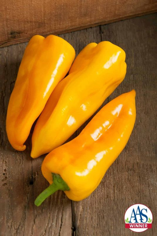 Pepper Escamillo F1 2016 AAS Vegetable Award Winner A wonderful sweet taste on a golden yellow pepper makes Pepper Escamillo F1, one of our 2016 AAS Winners.