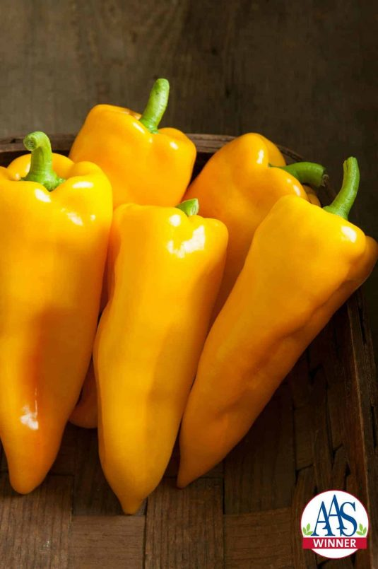 Pepper Escamillo F1 Edible - Vegetable Winner A wonderful sweet taste on a golden yellow pepper makes Pepper Escamillo F1an ideal choice for any home garden.