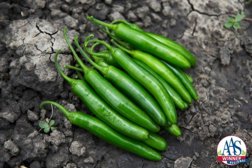 Pepper Flaming Jade F1 2016 AAS Vegetable Award Winner When you need Serrano peppers to help bring the heat to your recipes, look no further than Pepper Flaming Jade F1, our AAS Regional Winner for the Heartland and Great Lakes areas.