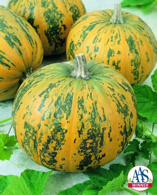 Pumpkin Pepitas Edible - Vegetable Winner The newest All-America Selections award winning pumpkin, Pepitas, is a winner in both the decorative and culinary arenas. Pepitas is named for its hulless or naked seeds (pepitas) that lack the tough outer hull making them easy to eat.