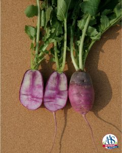 Radish Sweet Baby Edible Vegetable Winner Sweet Baby accurately describes the look of this beautiful purple/white/rose colored radish.