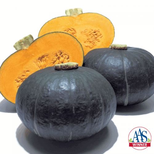 Squash Sweet Mama - AAS Edible - Vegetable Winner