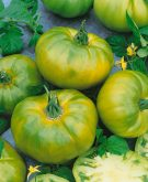 Tomato Chef's Choice Green AAS Vegetable Award Winner. The newest addition to the Chef's Choice series produces beautiful green colored fruits with subtle yellow stripes and a wonderful citrus-like flavor and perfect tomato texture.