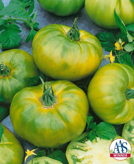 AAS Edible - Vegetable Winner Looking for a uniquely colored yet delicious tomato with which to impress your foodie friends? Then look no further than this AAS Winner, Tomato Chef's Choice Green.