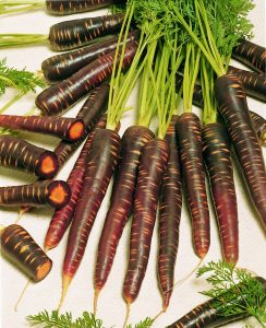 Carrot Purple Haze F1 - 2006 AAS Vegetable Award Winner 'Purple Haze' is the first imperator-shaped purple carrot.