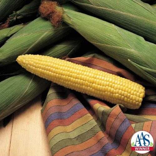 Corn Sweet Honey Select F1 - 2001 AAS Edible - Vegetable Winner 'Honey Select' has proven its delicious sweet honey flavor and tender eating quality in trials across North America.